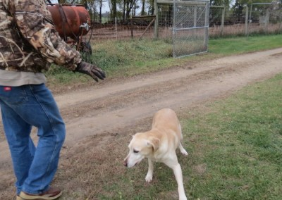 Stonehearth-Kennels-lilly-16