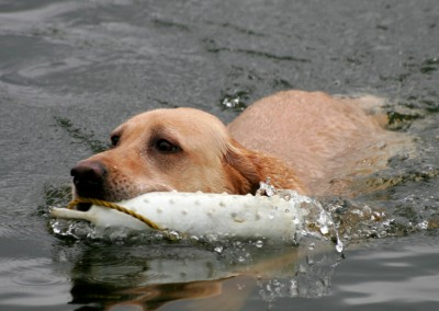 Water Retrieval